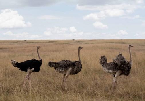 Burigi Chato Safaris Co. Ltd Serengeti Norongoro Safari Best Tour Agency Company Operator In Moshi Arusha Tanzania Africa) (165)