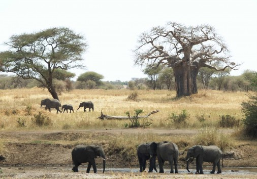 Burigi Chato Safaris Co. Ltd Serengeti Norongoro Safari Best Tour Agency Company Operator In Moshi Arusha Tanzania Africa) (168)