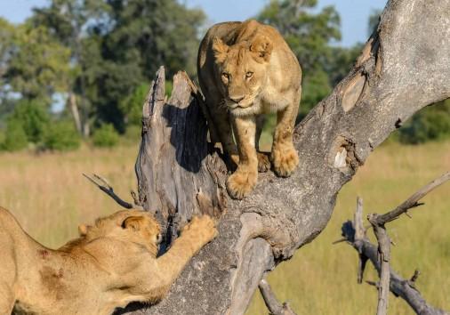 Burigi Chato Safaris Co. Ltd Serengeti Norongoro Safari Best Tour Agency Company Operator In Moshi Arusha Tanzania Africa) (186)