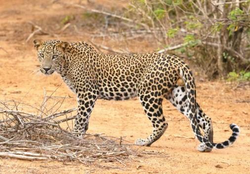 Burigi Chato Safaris Co. Ltd Serengeti Norongoro Safari Best Tour Agency Company Operator In Moshi Arusha Tanzania Africa) (196)
