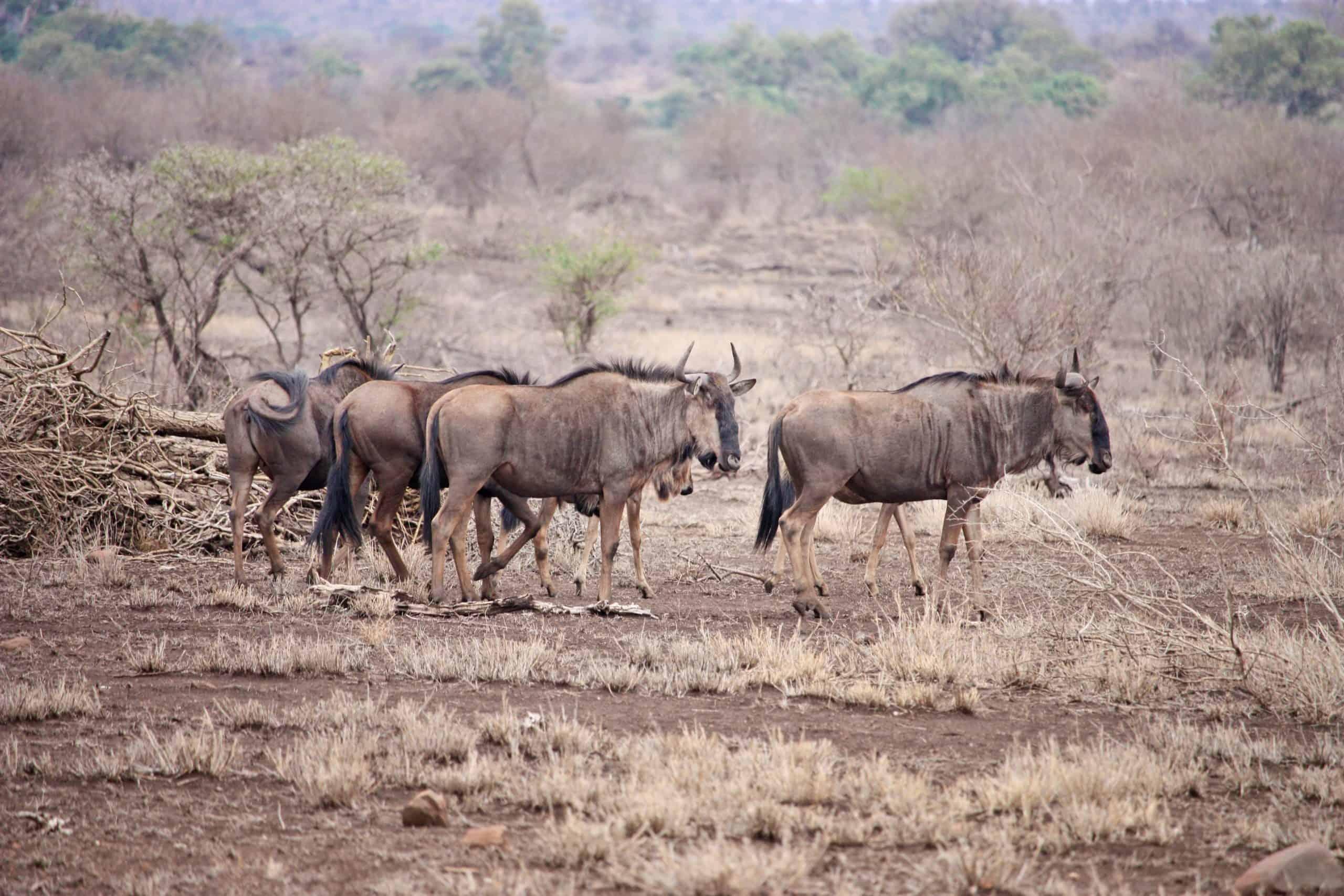 Burigi Chato Safaris Co. Ltd Serengeti Norongoro Safari Best Tour Agency Company Operator In Moshi Arusha Tanzania Africa) (23)