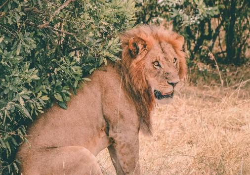 Burigi Chato Safaris Co. Ltd Serengeti Norongoro Safari Best Tour Agency Company Operator In Moshi Arusha Tanzania Africa) (231)