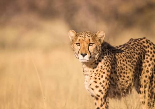 Burigi Chato Safaris Co. Ltd Serengeti Norongoro Safari Best Tour Agency Company Operator In Moshi Arusha Tanzania Africa) (267)