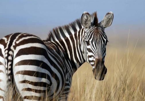 Burigi Chato Safaris Co. Ltd Serengeti Norongoro Safari Best Tour Agency Company Operator In Moshi Arusha Tanzania Africa) (270)