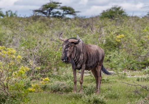 Burigi Chato Safaris Co. Ltd Serengeti Norongoro Safari Best Tour Agency Company Operator In Moshi Arusha Tanzania Africa) (280)
