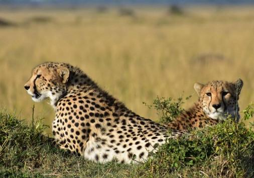 Burigi Chato Safaris Co. Ltd Serengeti Norongoro Safari Best Tour Agency Company Operator In Moshi Arusha Tanzania Africa) (32)