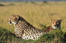 Best of Tanzania Game Viewing Safari