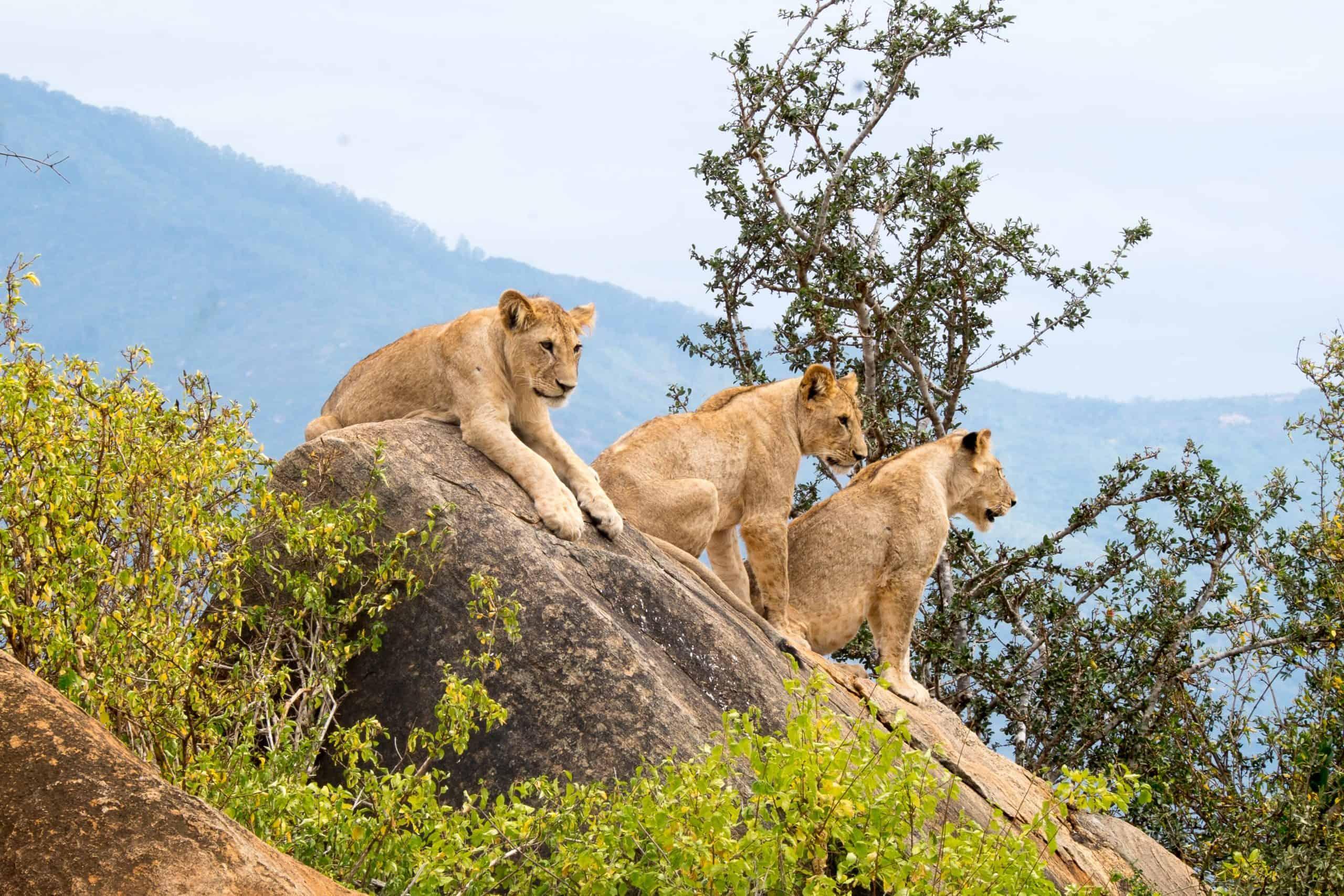 Burigi Chato Safaris Co. Ltd Serengeti Norongoro Safari Best Tour Agency Company Operator In Moshi Arusha Tanzania Africa) (40)
