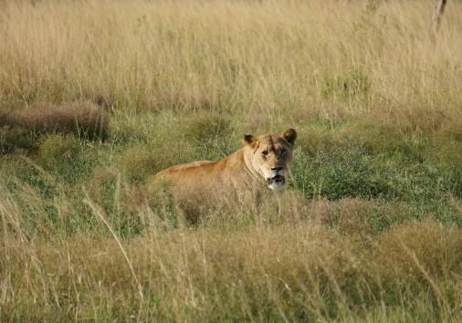 Burigi Chato Safaris Co. Ltd Serengeti Norongoro Safari Best Tour Agency Company Operator In Moshi Arusha Tanzania Africa) (5)