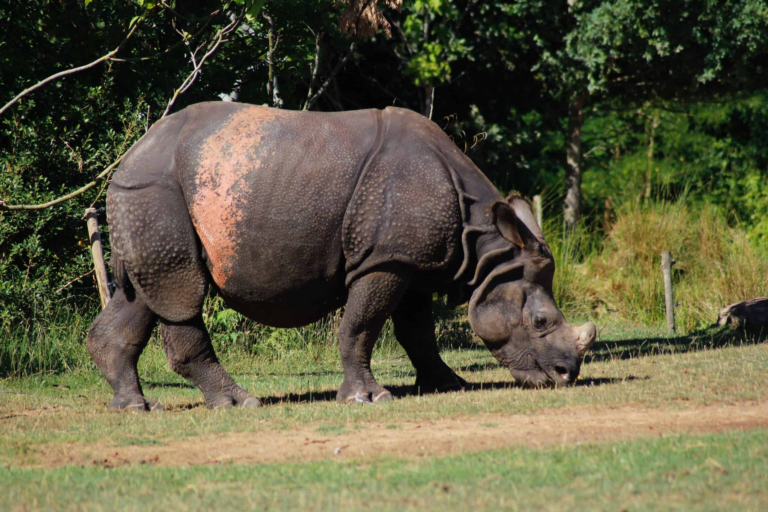 Burigi Chato Safaris Co. Ltd Serengeti Norongoro Safari Best Tour Agency Company Operator In Moshi Arusha Tanzania Africa) (51)