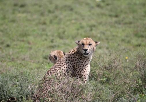 Burigi Chato Safaris Co. Ltd Serengeti Norongoro Safari Best Tour Agency Company Operator In Moshi Arusha Tanzania Africa) (53)