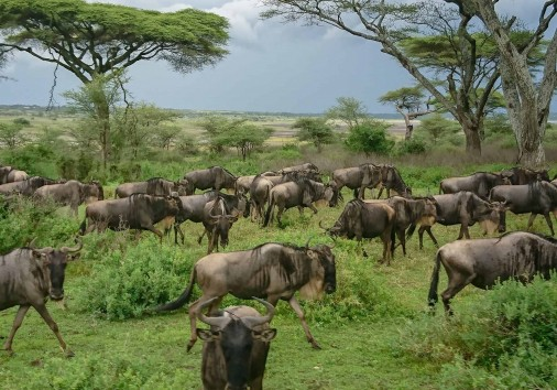 Burigi Chato Safaris Co. Ltd Serengeti Norongoro Safari Best Tour Agency Company Operator In Moshi Arusha Tanzania Africa) (55)