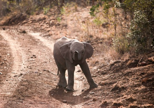 Burigi Chato Safaris Co. Ltd Serengeti Norongoro Safari Best Tour Agency Company Operator In Moshi Arusha Tanzania Africa) (57)
