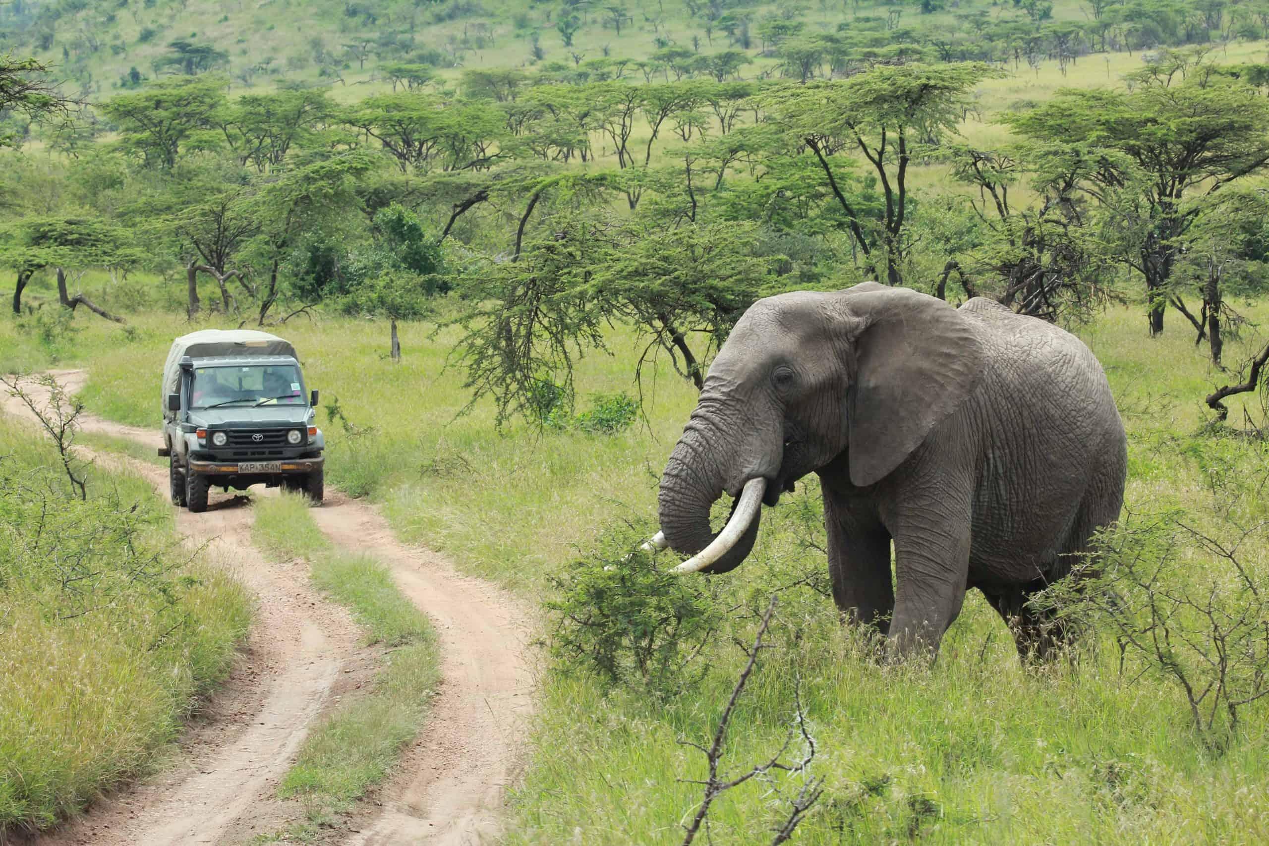 Burigi Chato Safaris Co. Ltd Serengeti Norongoro Safari Best Tour Agency Company Operator In Moshi Arusha Tanzania Africa) (6)