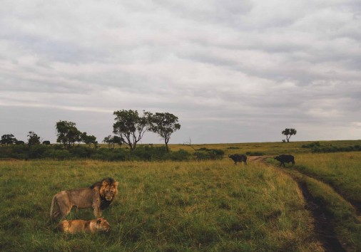 Burigi Chato Safaris Co. Ltd Serengeti Norongoro Safari Best Tour Agency Company Operator In Moshi Arusha Tanzania Africa) (64)
