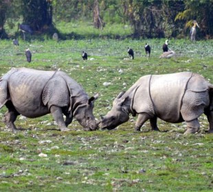 Kaziranga Sunderban Safari Adventure Tour