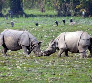 Kaziranga Sunderban Safari Adventure Tour