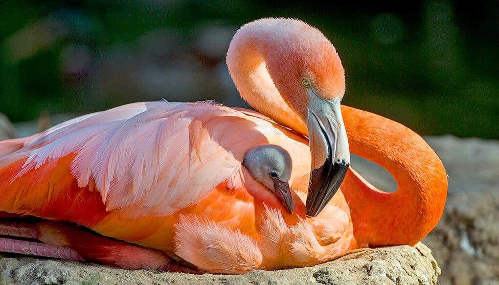 Flamingo Nest