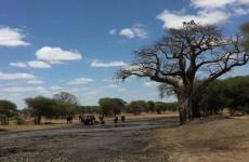 Best of Tanzania Camping Safari