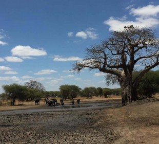 Best of Tanzania Camping Safari