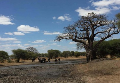 7-Day Best of Tanzania Camping Safari