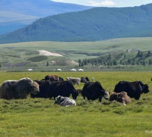 Zavkhan – Land of Nomads – Cultural Safari