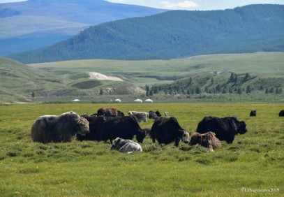 Zavkhan – Land of Nomads – Cultural Safari