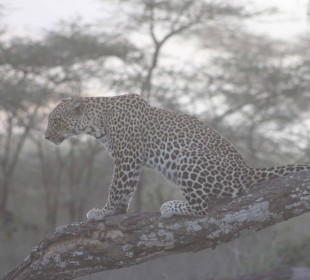 4-Day Masai Mara Wildebeest Migration Safari