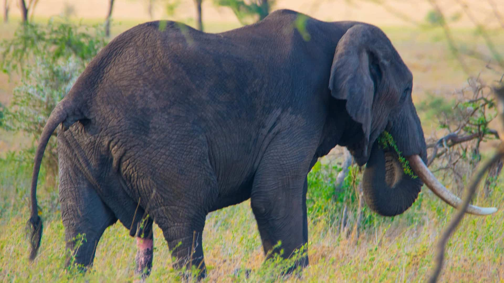 Best Budget Safaris
