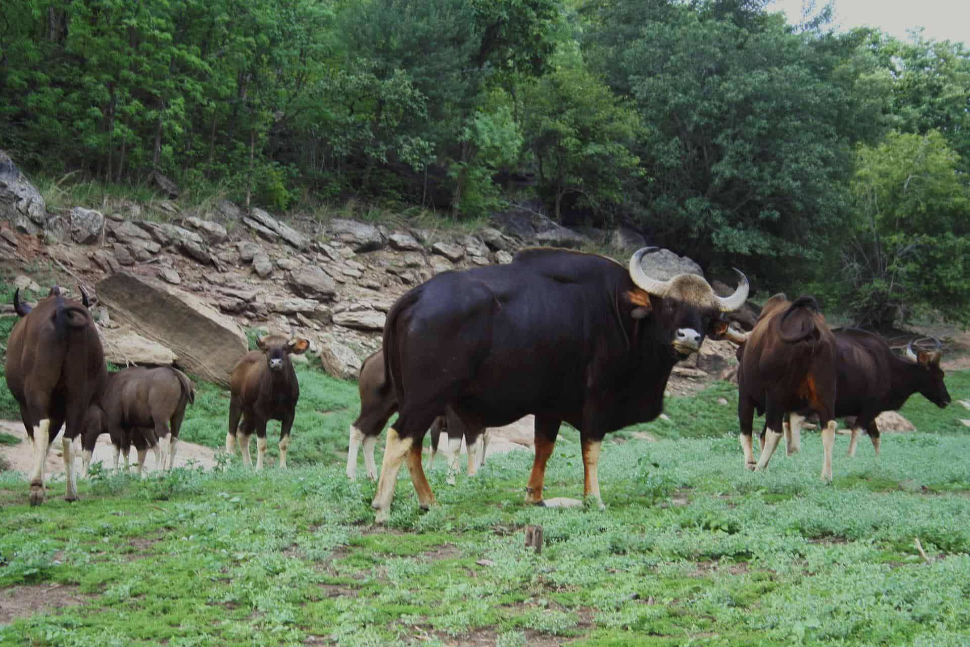 Pachmarhi Satpura National Park 0