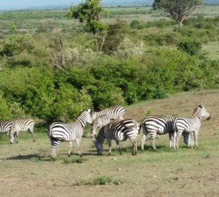 8-Day Kenyan National Parks Safari