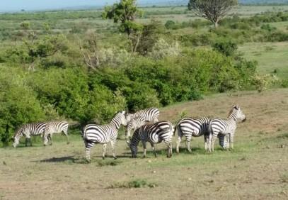 8-Day Kenyan National Parks Safari