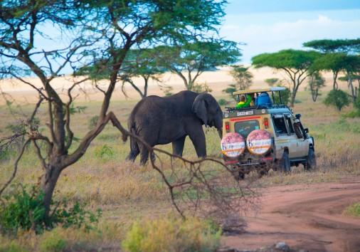 Tanzania Elephant Safaris