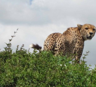 11-Day Wildlife Safari & Zanzibar
