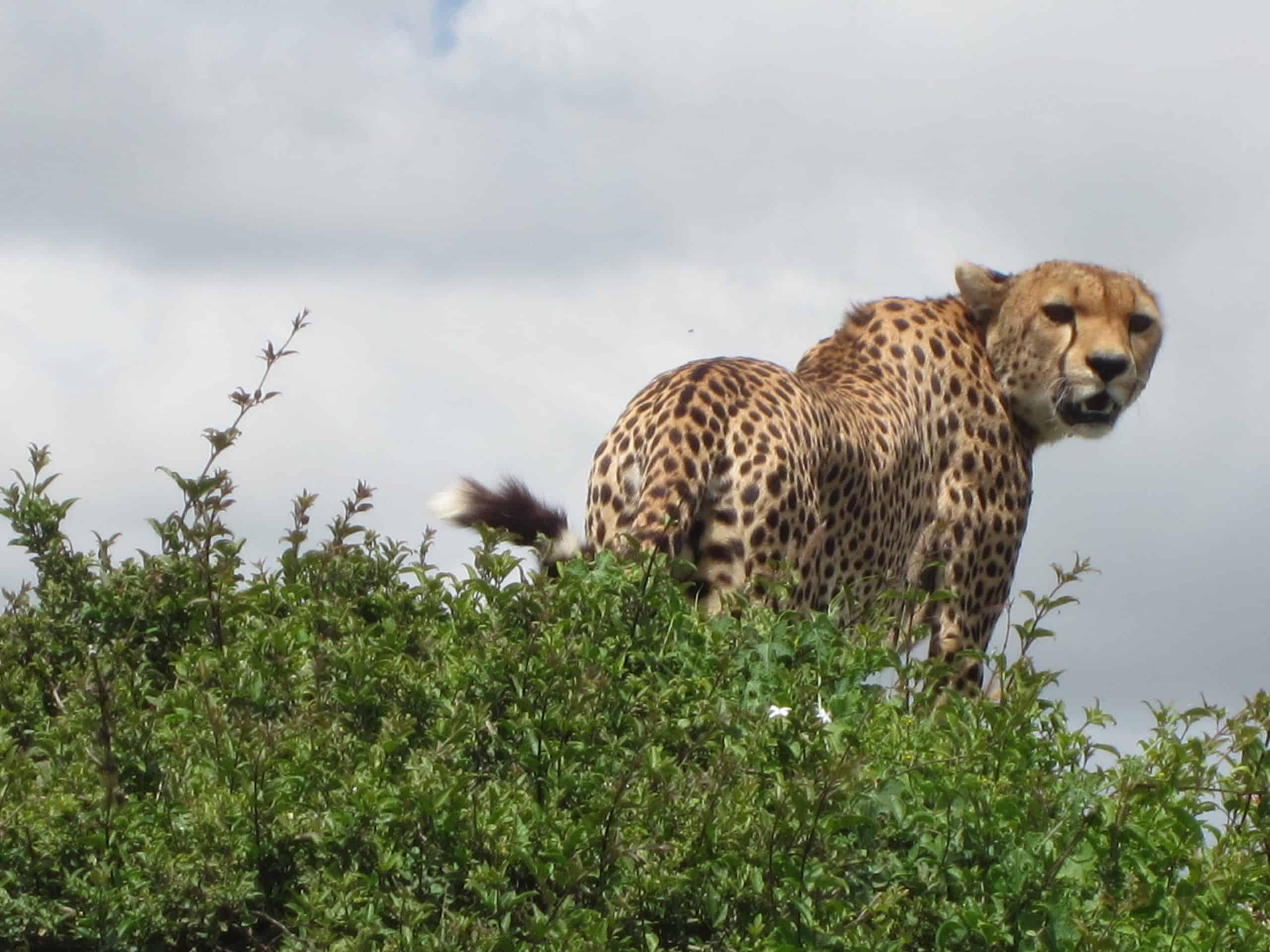 11 Day Safari & Zanzibar #2