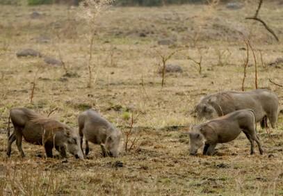12-Day Kenya Big Five Safari