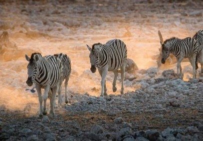 7-Day Tanzania Wildlife Safari