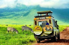 6-Day Comfort Safari Tour