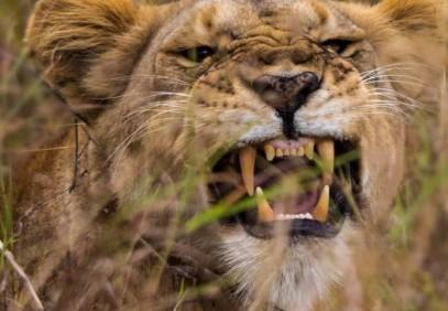 5-Day Tanzania Safari Trip