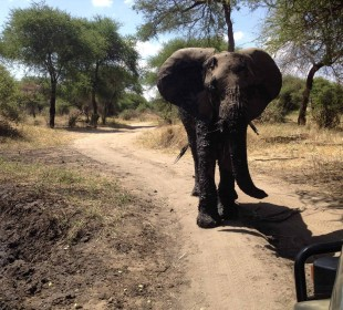 3-Day Tanzania Crater & Lake Safari