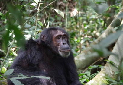 10-Day Uganda Chimpanzee and Gorilla Trekking Safari