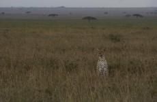10-Day Tanzania Wildlife Safari