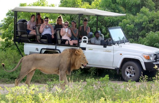 Top Tips: What Not to Do on an African Safari