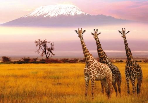 Amboseli Vista