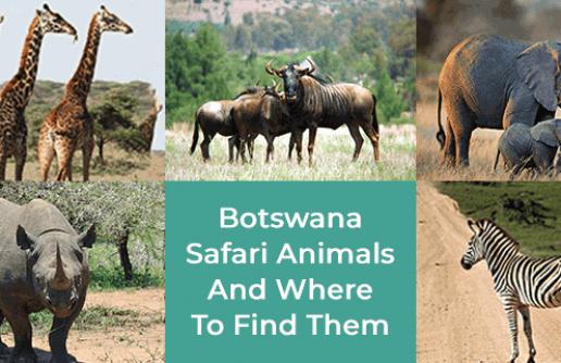 Botswana Safari Animals And Where To Find Them