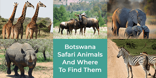 Botswana Safari Animals And Where To Find Them