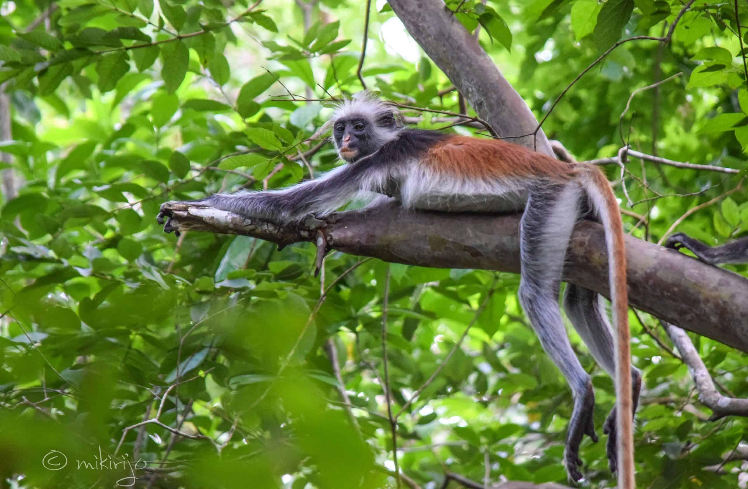 Zanzibar wild animals attraction