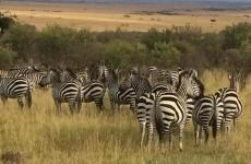 12-Day Best of Kenya Safari