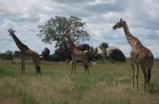 2-Day Ngorongoro Crater & Tarangire National Park