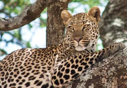 16-Day East African Safari